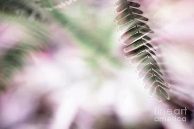 Photograph - Parallel Botany #8418 by Andrey Godyaykin
