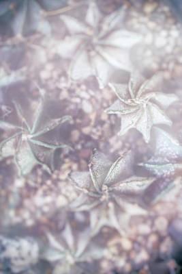 Photograph - Parallel Botany #8453 by Andrey Godyaykin