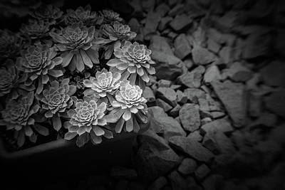 Photograph - Parallel Botany #8474 by Andrey Godyaykin