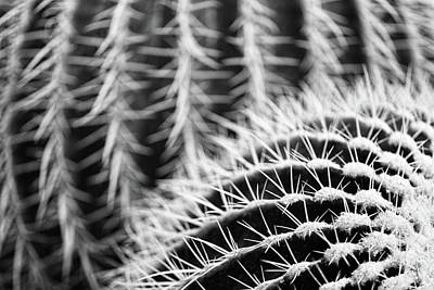 Photograph - Parallel Botany #8488 by Andrey Godyaykin