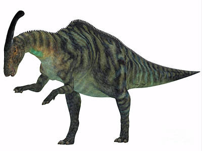 Parasaurolophus Digital Art - Parasaurolophus Dinosaur On White by Corey Ford