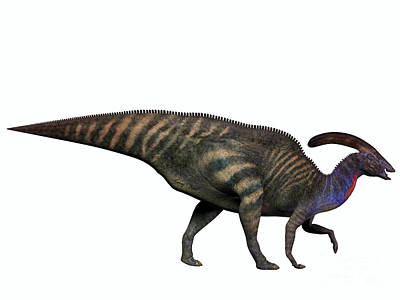 Parasaurolophus Digital Art - Parasaurolophus On White by Corey Ford