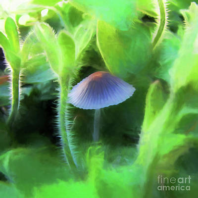 Photograph - Parasol Mushroom by John Freidenberg