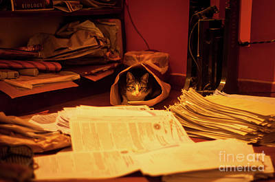 Photograph - Parcel Cat by Venura Herath