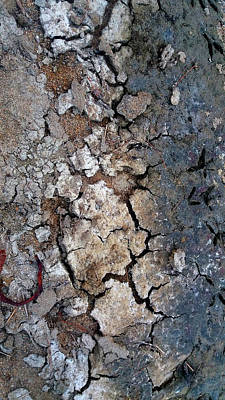 Photograph - Parched Earth by Nareeta Martin