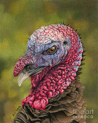 Wild Turkey Painting - Pardon Me? by Sarah Batalka