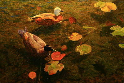 Painting - Paridise Ducks by Terry Perham