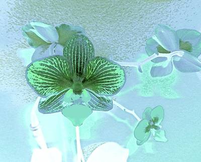 Digital Art - Paris Blue Orchid by Ann Johndro-Collins