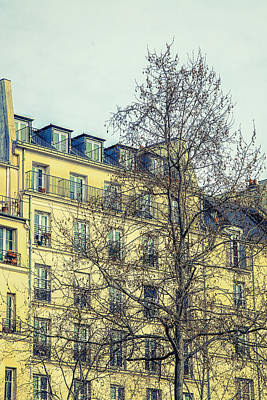 Bleached Tree Photograph - Paris Building by Andrew Soundarajan