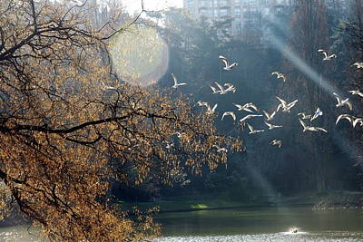 Flock Of Bird Photograph - Paris, Buttes Chaumont by Calinore
