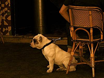 Photograph - Paris Dog by Louise Fahy