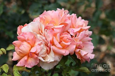 Paris Garden Roses Art Print by Carol Groenen
