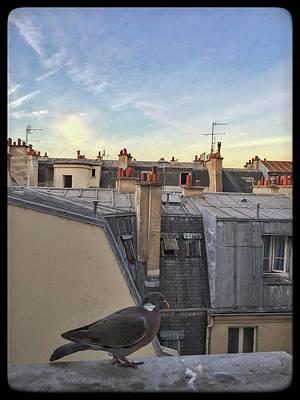 Photograph - Paris Rooftop Pigeon by Frank DiMarco