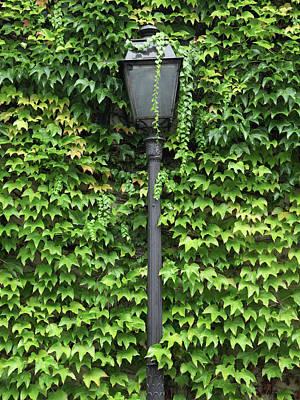 Parisian Lamp And Ivy Art Print by Yoel Koskas