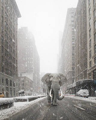 Photograph - Park Avenue Elephant by Jakob Dahlin