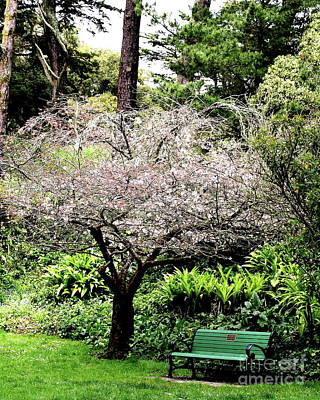 Park Bench At The Old Cherry Blossom Tree . 7d5804 Art Print by Wingsdomain Art and Photography