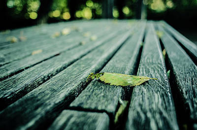 Photograph - Park Bench by Miguel Winterpacht