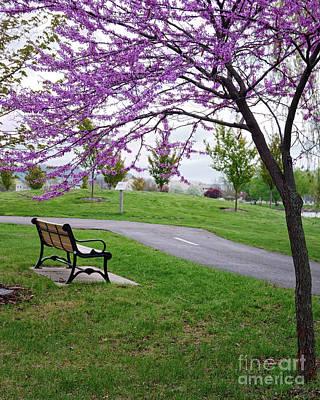Photograph - Park Bench With Redbud Tree Winona Mn By Yearous by Kari Yearous