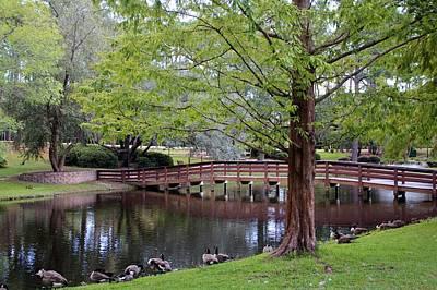 Photograph - Park Geese by Cynthia Guinn