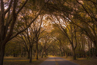 Saw Palmetto Photograph - Park Overhang by Marvin Spates