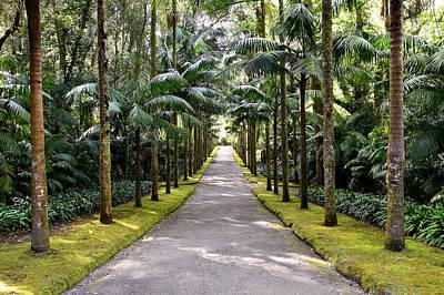 Photograph - Park Terra Nostra, Azores by Juraj Simek