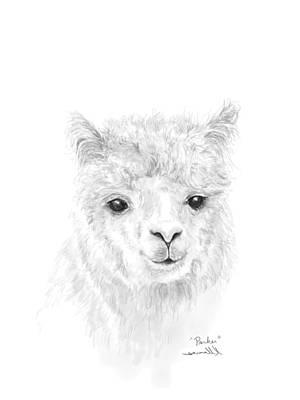 Animals Drawings - Parker by K Llamas