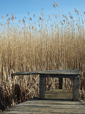 Photograph - Parker River Wildlife Refuge by Mary Capriole