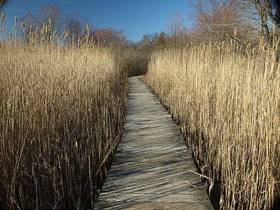Photograph - Parker River Wildlife Refuge Path by Mary Capriole