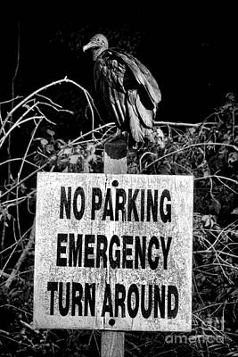 Traffic Signs Photograph - Parking Enforcement by Olivier Le Queinec