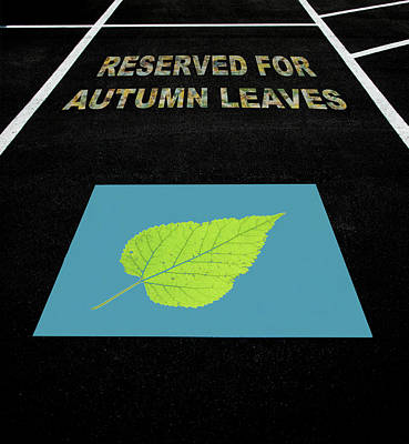 Photograph - Parking Space Reserved For Autumn Leaves by Gary Slawsky