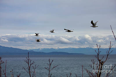 Photograph - Parksville Beach Gulls by Donna L Munro