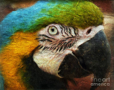Macaw Mixed Media - Parrot by Angela Doelling AD DESIGN Photo and PhotoArt