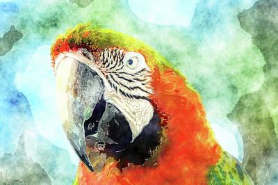 Mixed Media - Parrot Art by Ken Figurski
