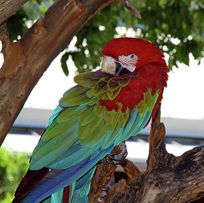 Photograph - Parrot by Inspirational Photo Creations Audrey Woods