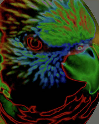 Digital Art - Parrot Bright by Debra     Vatalaro