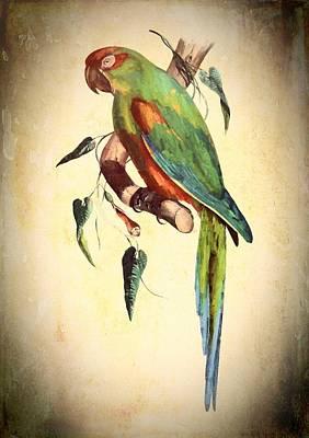 Mixed Media - Parrot by Charmaine Zoe