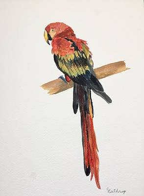 Painting - Parrot by Christine Lathrop