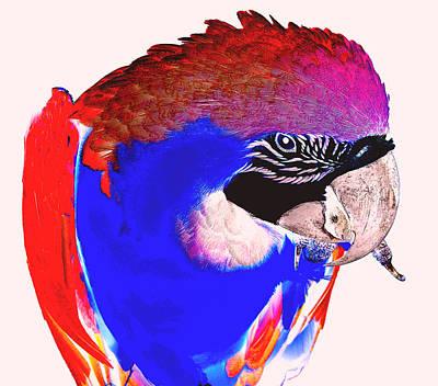 Photograph - Parrot Colors by Amanda Vouglas