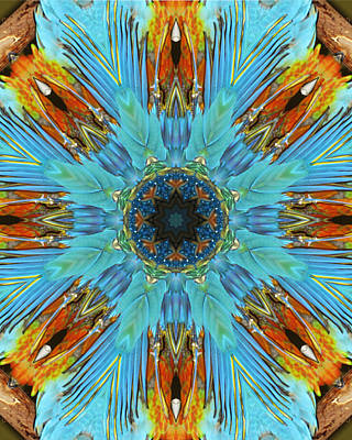 Digital Art - Parrot Feathers Kaleidoscope by Francesa Miller