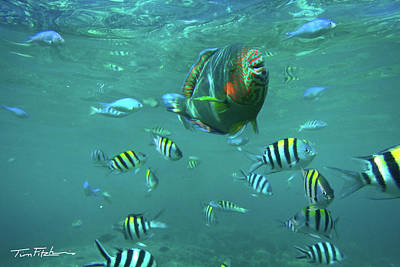 Parrot Fish Art Print