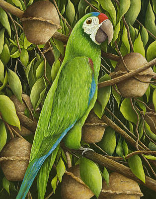 Painting - Parrot In Brazil Nut Tree by Mary Ann King