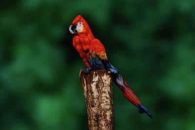 Parrot Original by Johannes Stoetter