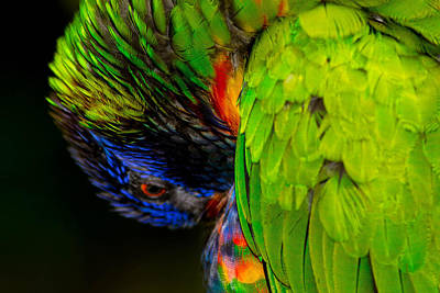 Photograph - Parrot Macro by Shannon Harrington
