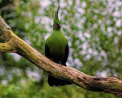 Wild Parrots Photograph - Parrot by Martin Newman