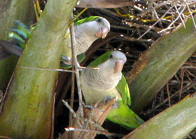 Photograph - Parrot Pair by T Guy Spencer