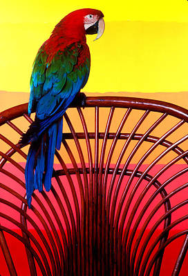 Macaw Photograph - Parrot Sitting On Chair by Garry Gay