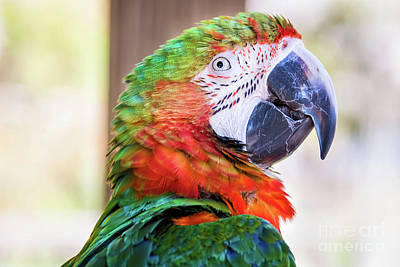 Photograph - Parrot by Stephanie Hayes