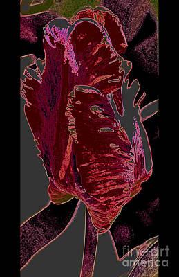 Photograph - Parrot Tulip by Diane montana Jansson