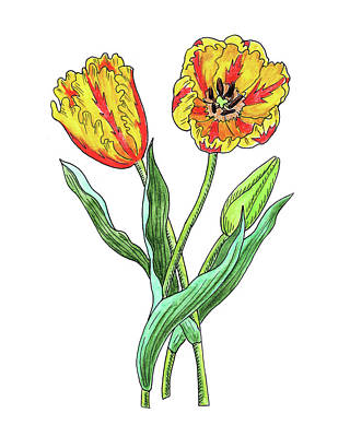 Painting - Parrot Tulips Botanical Watercolor  by Irina Sztukowski