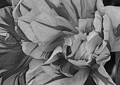 Photograph - Parrot Tulips In Black And White by Nadalyn Larsen